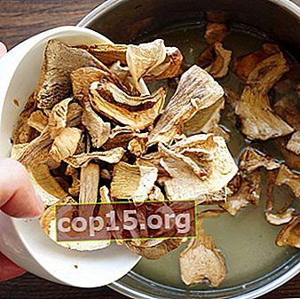 Come mettere a bagno i funghi porcini secchi: consigli per le casalinghe