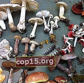 La struttura, lo sviluppo e la nutrizione dei funghi: le caratteristiche principali