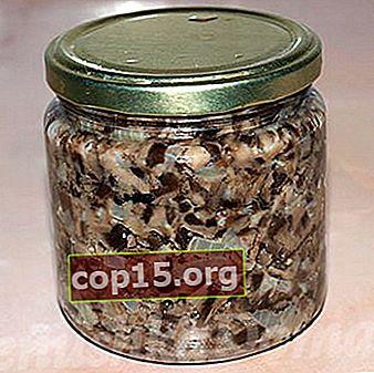 Receta de caviar de hongos de otoño