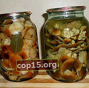 Agarico di miele salato in barattoli: ricette veloci e gustose