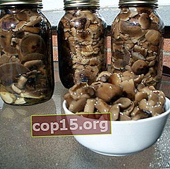 Modi fatti in casa di raccolta dei funghi per l'inverno