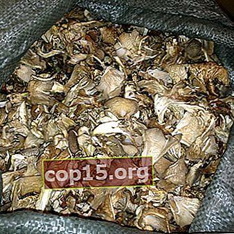 Torkade ostronsvampar och recept från dem
