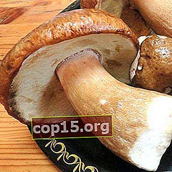 Come cucinare i funghi porcini sott'aceto
