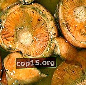 Waarom verzuurde gezouten champignons en wat te doen in dit geval?