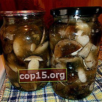 Welke paddenstoelen zijn beter om in de winter te pekelen