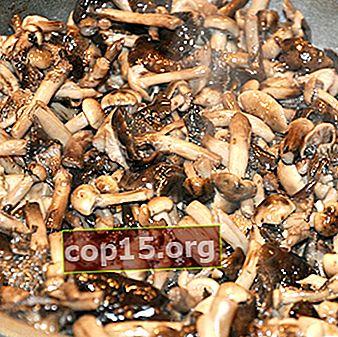 Funghi al miele fritti con cipolle: ricette per piatti a base di funghi