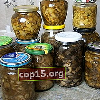 Funghi sott'aceto per l'inverno: ricette fatte in casa