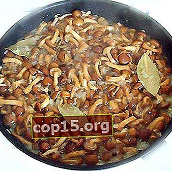 Hoe honingpaddestoelen in een pan te koken