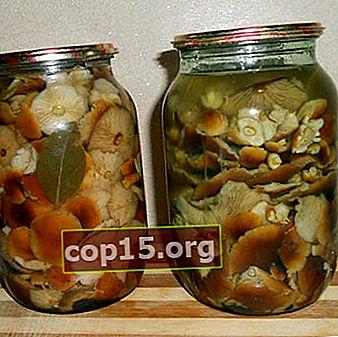 Inscatolare i funghi al miele senza aceto: ricette per l'inverno