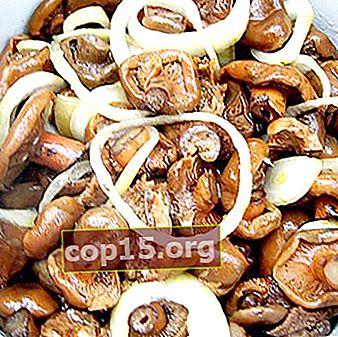 Salare i funghi in modo freddo, caldo e secco