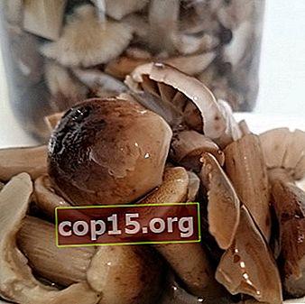 Raccolta di funghi autunnali per l'inverno: ricette fatte in casa