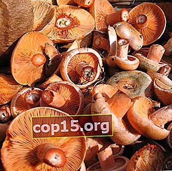 Come conservare i funghi dopo la raccolta e la lavorazione