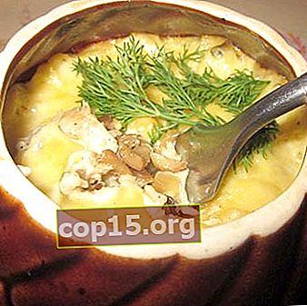 Finferli in vaso: ricette per piatti a base di funghi !!!