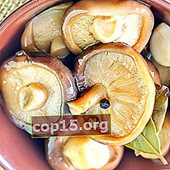 Recettes de champignons au lait marinés avec du vinaigre pour l'hiver