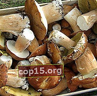 Lavorazione, conservazione dei funghi a casa