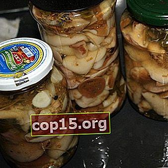 Beurré à l'huile: comment saler et mariner les champignons