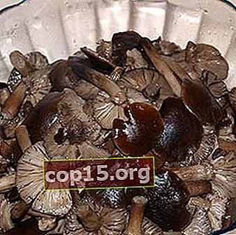 Comment faire cuire correctement les champignons bouillis pour l'hiver