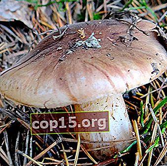 Rij witbruin: foto en beschrijving van de paddenstoel