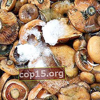 Warm beitsen en zouten van saffraanmelkkappen voor de winter