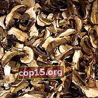 Droge melkchampignons: recepten voor champignonbereidingen voor de winter