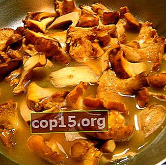 Come cucinare i finferli: consigli pratici