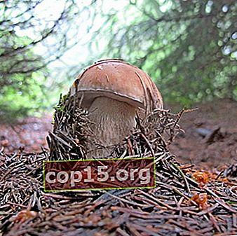 Funghi porcini nel territorio di Krasnodar: luoghi e stagione della raccolta