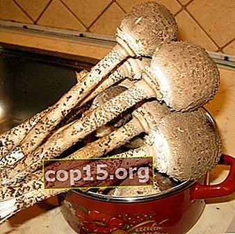 Ombrelli ai funghi per l'inverno: ricette per preparazioni fatte in casa