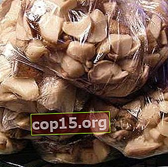 Congelare i funghi ostrica per l'inverno a casa