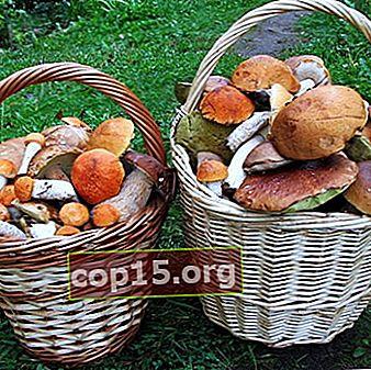 Egenskaper för de viktigaste ekologiska svampgrupperna
