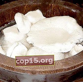 Funghi al latte salato in botte e ricette per la loro preparazione