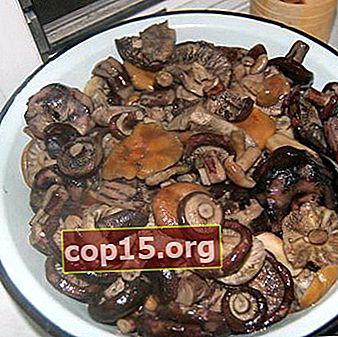 Cucinare funghi di latte nero in vari modi