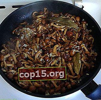 Cum se procesează ciupercile după recoltare și se pregătesc pentru prăjire