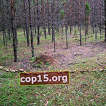 Tiden och förhållandena för tillväxt av svamp i skogen