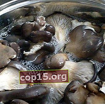 Hoe je oesterzwammen kookt en wat je ervan kookt