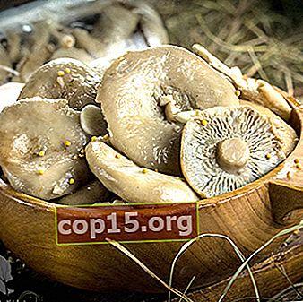 Come preparare i funghi per l'inverno a casa