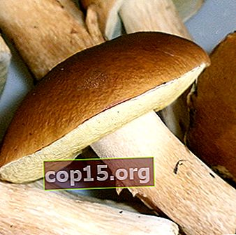 Quali deliziosi spazi vuoti di funghi porcini possono essere fatti