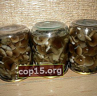 Funghi al miele salati in barattoli: ricette per preparazioni di funghi