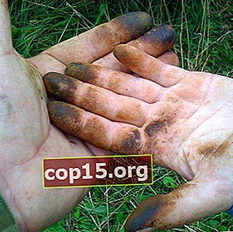 Lavarsi le mani dopo l'olio: ricette semplici