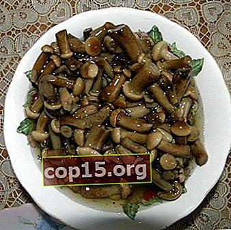 Funghi sott'aceto a casa: ricette per l'inverno