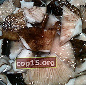 Ricette per marinare i funghi al latte caldi (con video)