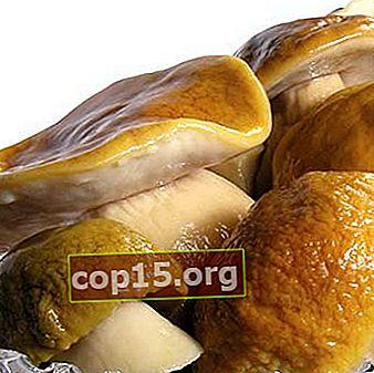 Come conservare i funghi porcini in casa