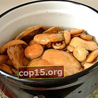 Ricette per funghi in salamoia cucinati senza sterilizzazione