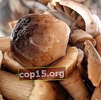 Preparaciones de invierno de agáricos de miel para el invierno: recetas de cocina.