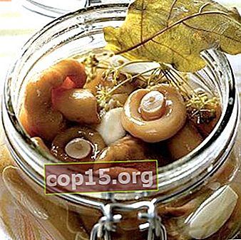Saltning svamp: recept för vintern