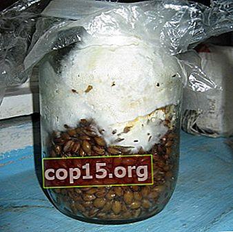 Sätt att göra ditt eget svampmycelium
