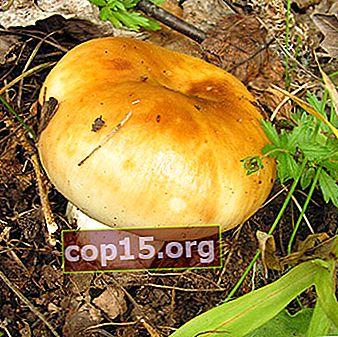 Sätt att laga Valuev-svampar på vintern