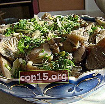 Hur man saltar ostronsvampar kalla och varma