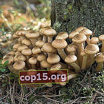 """Höst- och """"Uspensky"""" -svampar i Tula-regionen"""