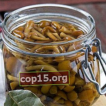 Salare gli agarichi di miele in modo caldo: ricette per l'inverno