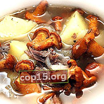 Piatti a base di funghi di finferli essiccati